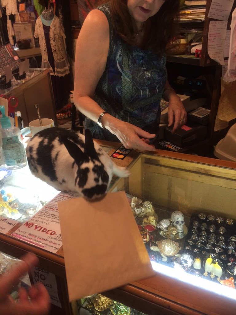 A Working Bunny