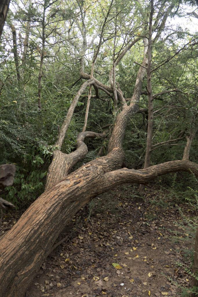 Sutton Wilderness Trail Park - photo by Dennis Spielman