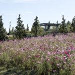 2016-10-21-tulsa-botanic-garden-14
