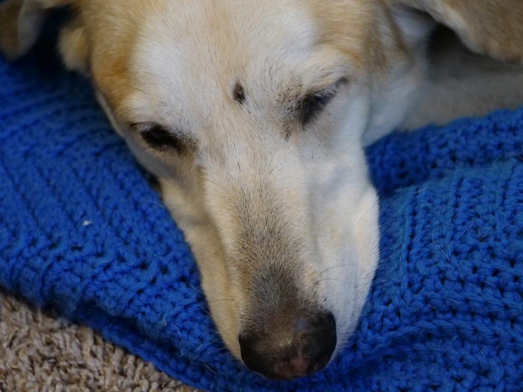 Our dog, Sasha, sleeping