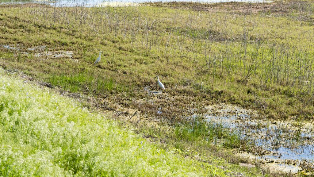 Wildlife at the Great Salt Plains State Park - photo by Dennis Spielman