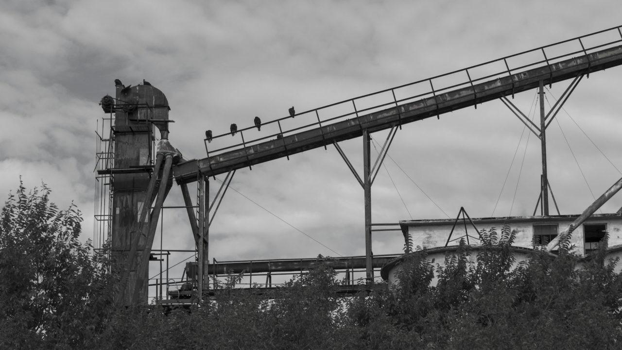 Vultures in Guthrie
