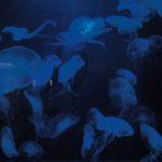Oklahoma Aquarium - Photo by Dennis Spielman