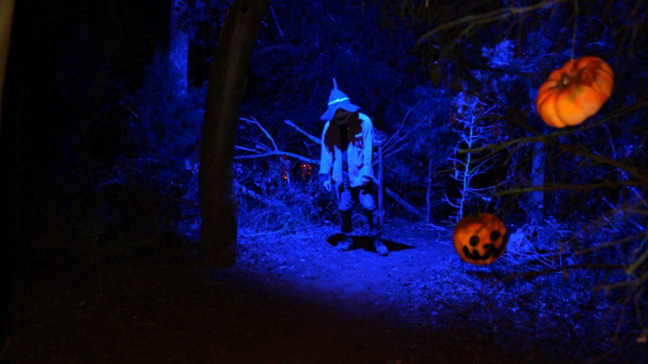 Wicked Forest of Terror - photo by Dennis Spielman